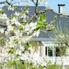 Villa Orchard Frankfurt