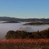 Croad Vineyards