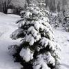 Christmas Tree Vineyard Lodge