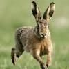 Hare Room - Luxury