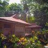 Jungle Bungalow Queen Suite . EMF