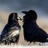 Raven's Nest Standard