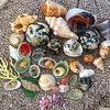 Purple Sea Shells Standard
