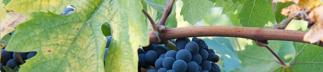 4   grapes
