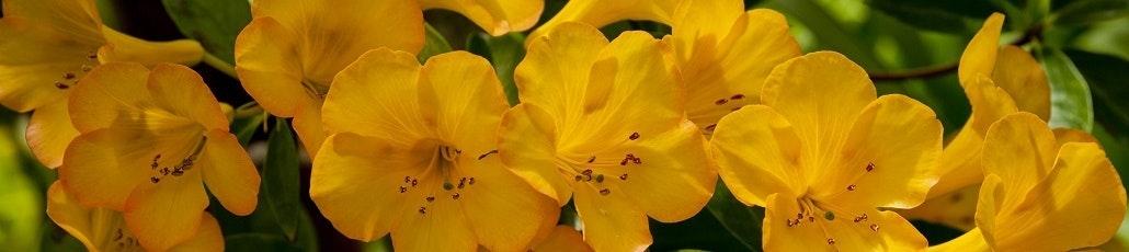 Flower header 1030x230