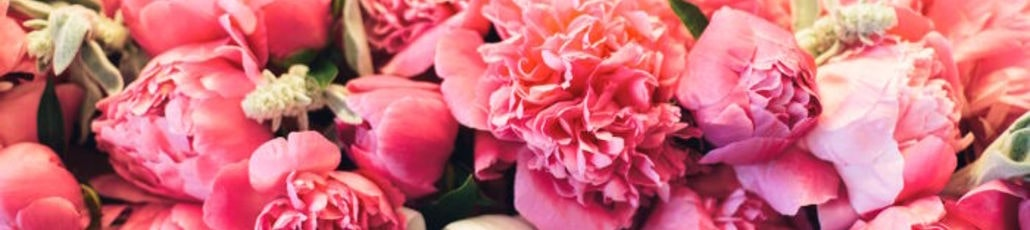 Peony meaning